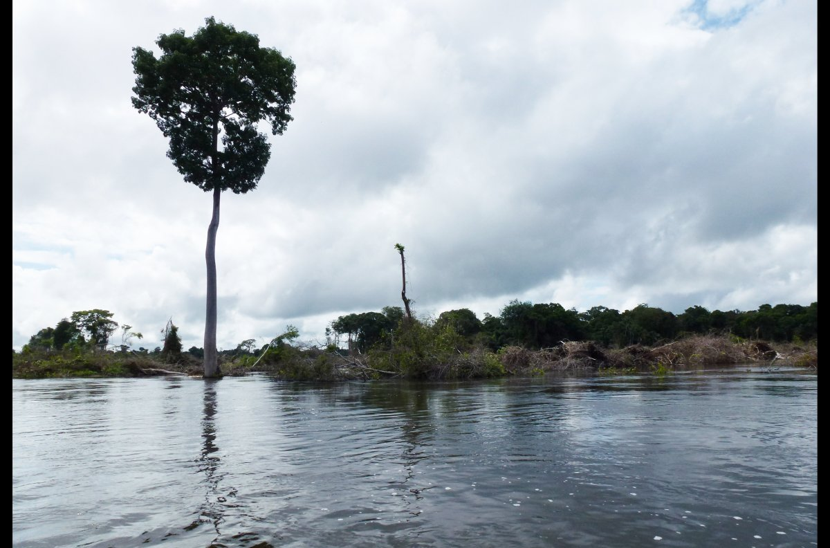 Damage done by deforestation caused by Norte Energia