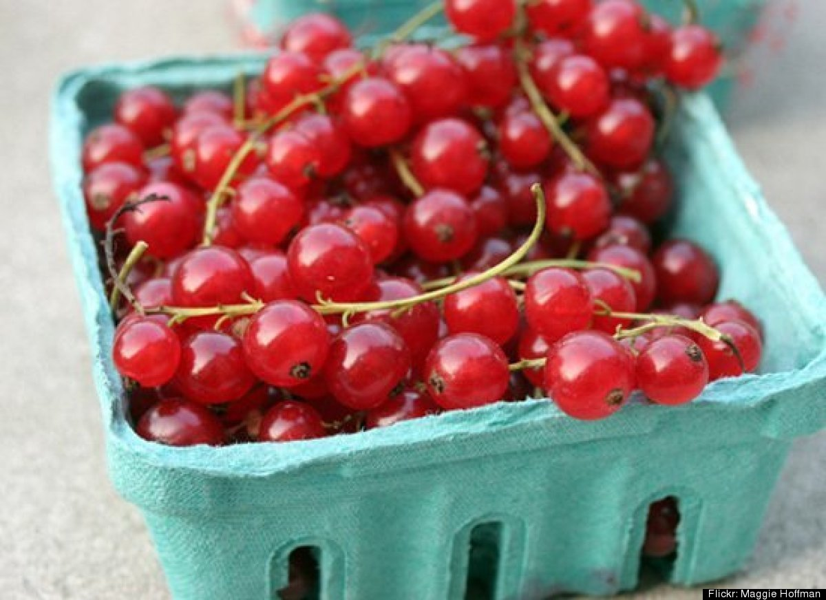 Currants are small fruits that grow in cool and moist climates. They can be red, purple or white in color. Currants have a ri