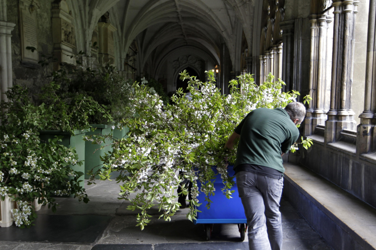 Florists deliver flowers and plants to Westminster Abbey in preparation for the Royal Wedding.  (AFP photo)