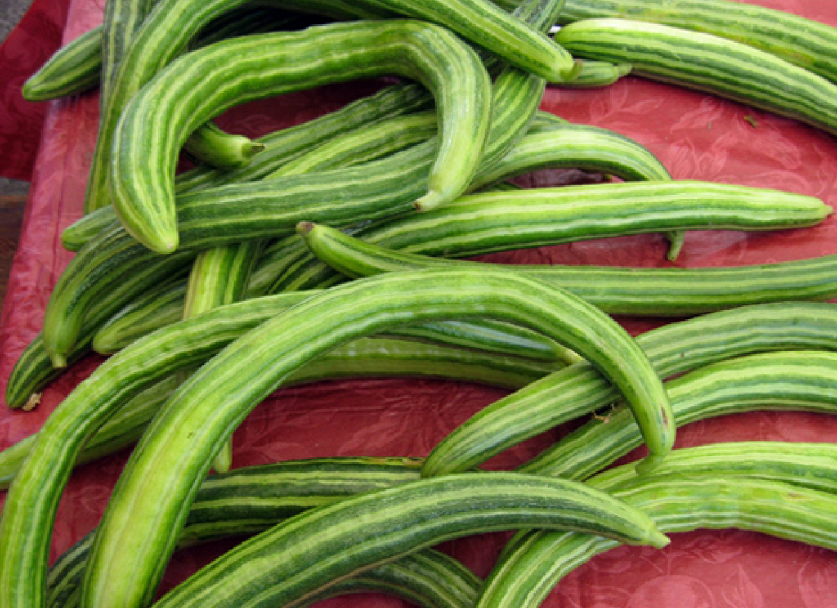 Armenian cucumbers are one of the most unusual looking cucumbers with thin, pale skin and a curved shape, which is why they a
