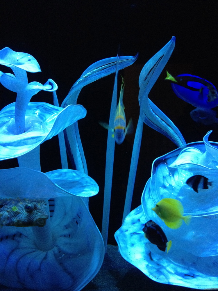 Exotic fish swim amidst Chihuly glass.