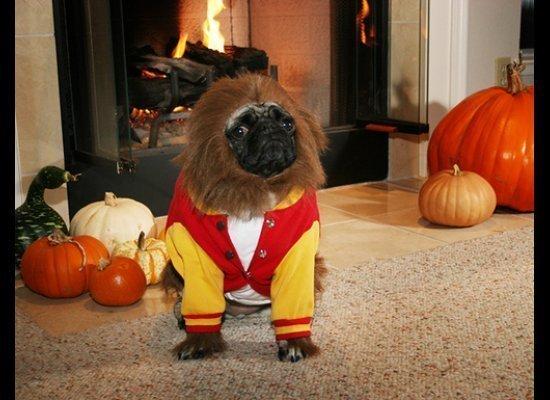 "Michael J. Fox has nothing on this hound! (Via <a href=""http://winniewong.typepad.com/shelby/2007/10/happy-halloween.html"" ta"