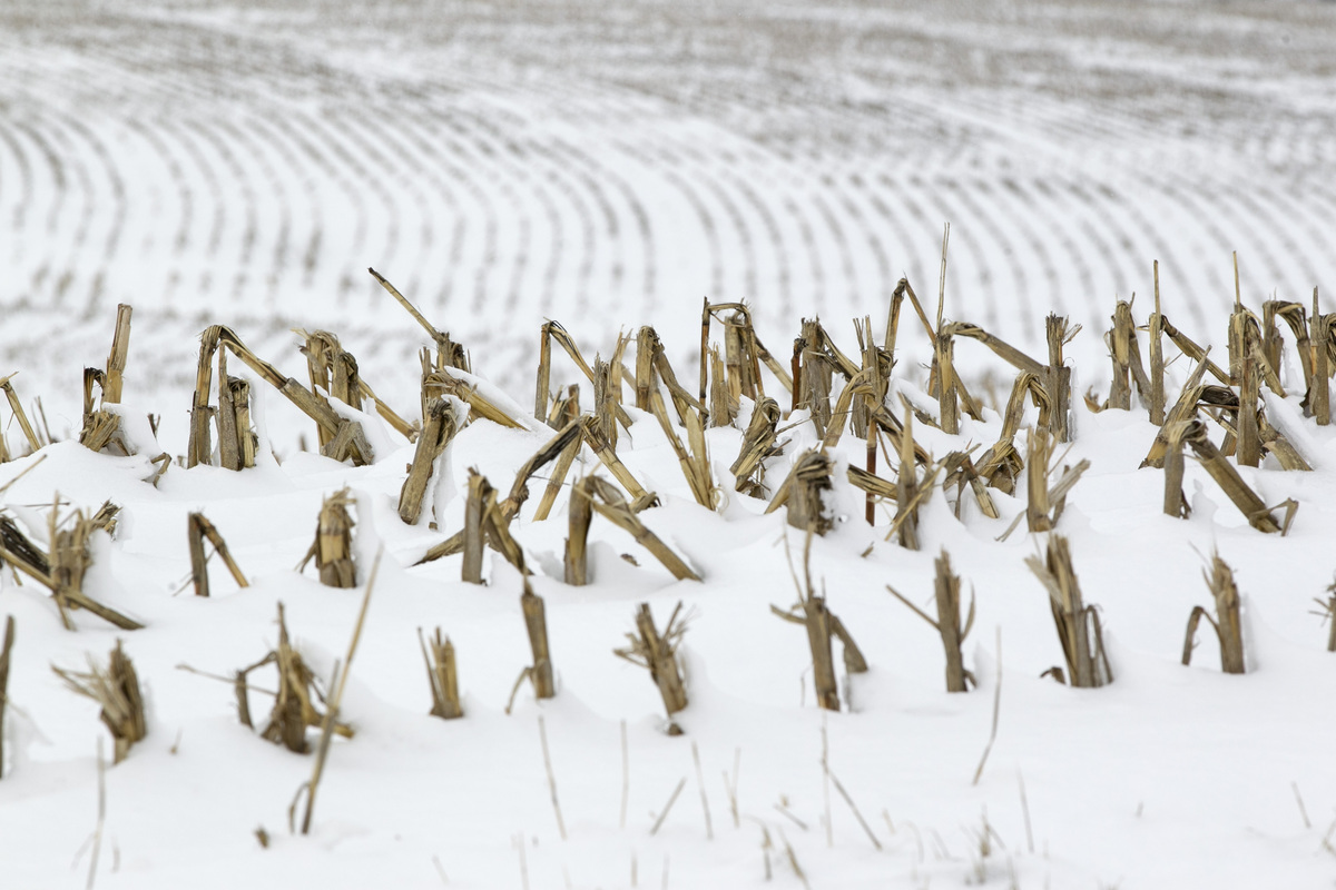In this Dec. 28, 2012 photo, corn stalks stand in a snowy field near La Vista, Neb. Despite getting some big storms in Decemb