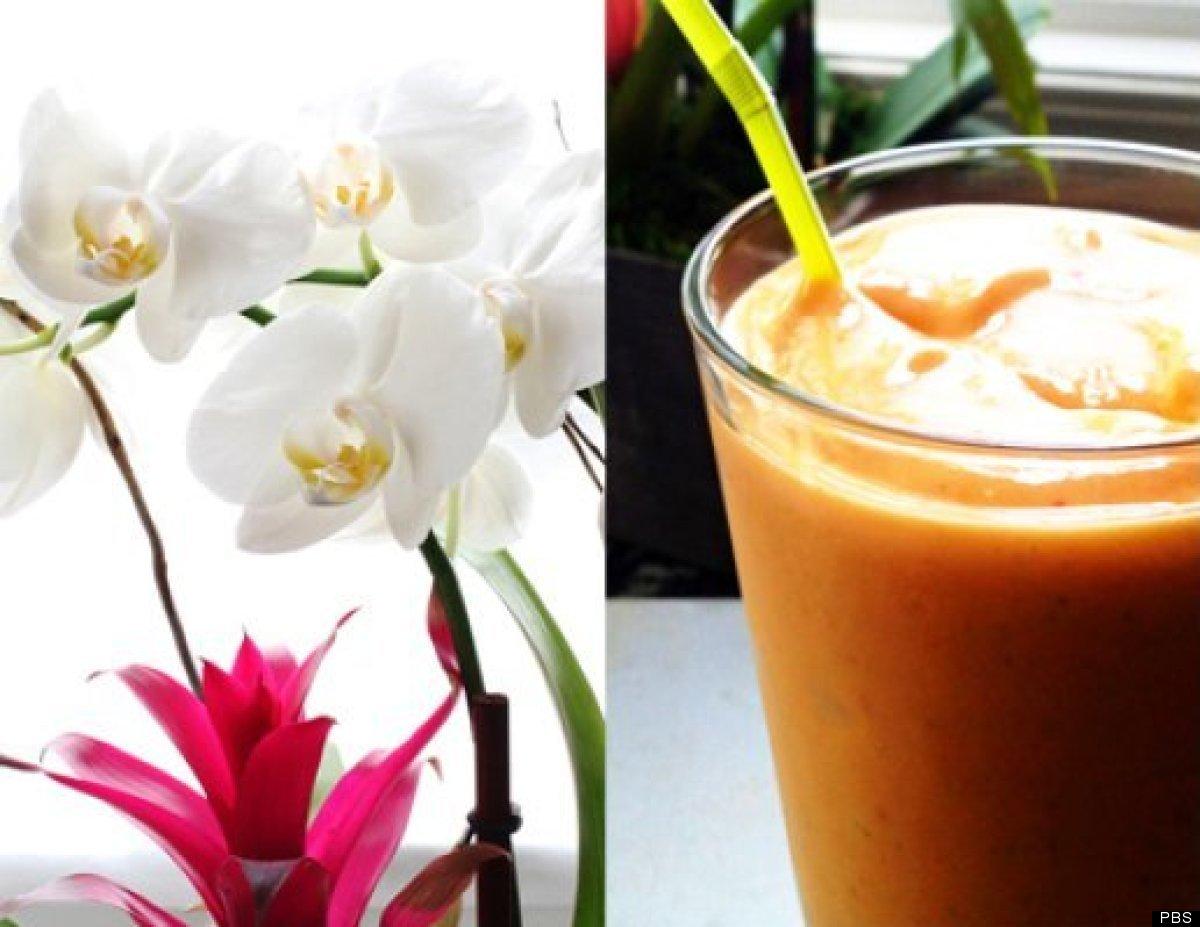 "<a href=""http://www.pbs.org/parents/kitchenexplorers/2011/07/07/strawberry-banana-frozen-yogurt-pops/"" target=""_hplink""><em>F"