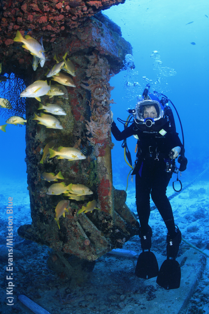 Courtesy of Kip Evans/One World One Ocean