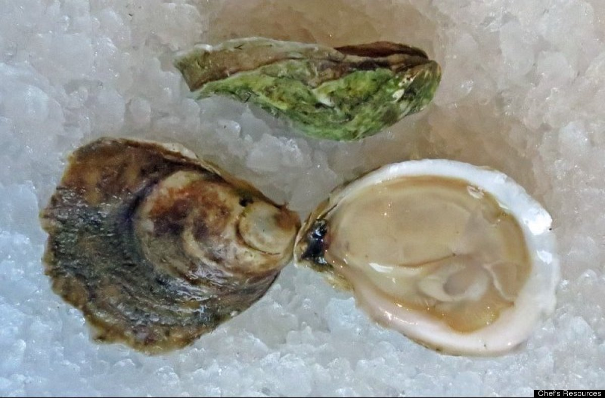 Blue Point Oyster Shell