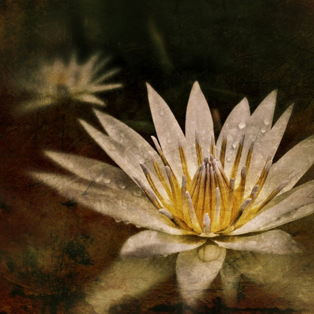 """Water Lily"" by Adria Ellis"