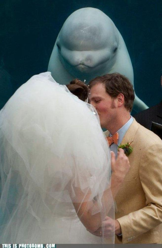 "via <a href=""http://memebase.cheezburger.com/thisisphotobomb/tag/wedding"" target=""_hplink"">This Is Photobomb</a>"