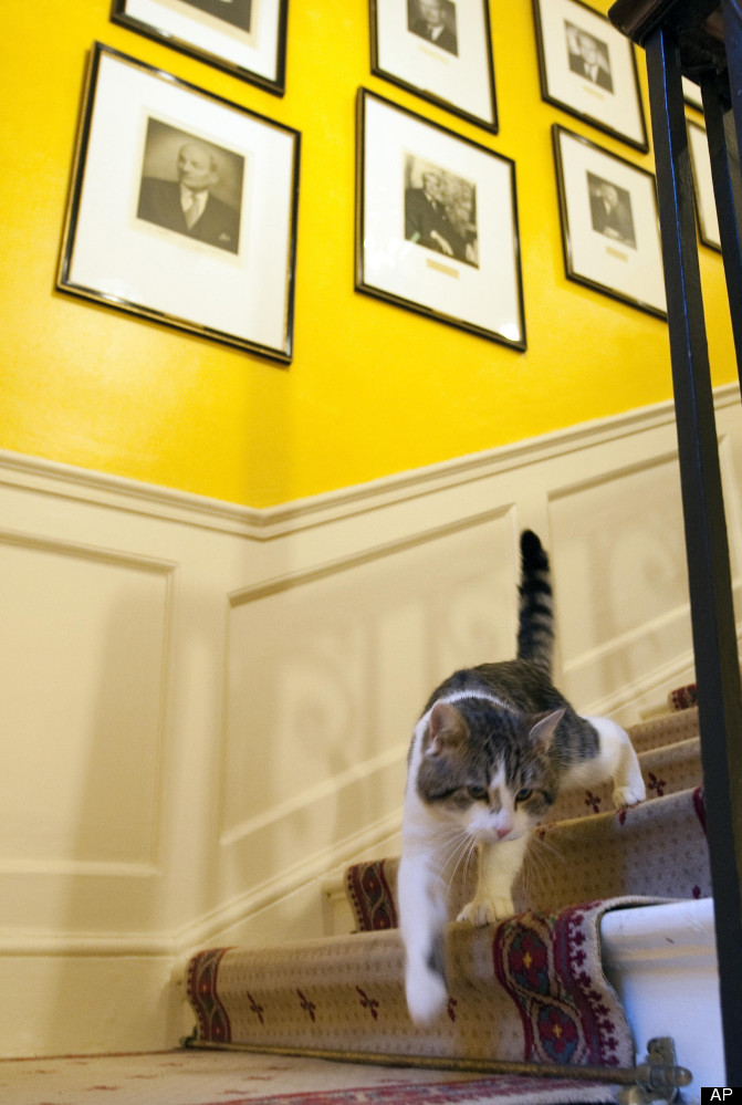 Larry the Downing Street cat on patrol on 15 Feb, 2011. Larry, a tabby recruited by Britain's Prime Minister David Cameron to