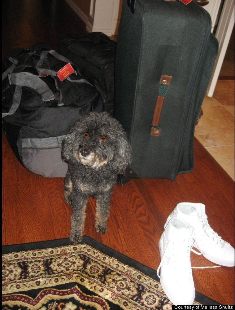 Benji-the-dog knows suitcases in the hallway can only mean one thing -- the big guy is leaving again.