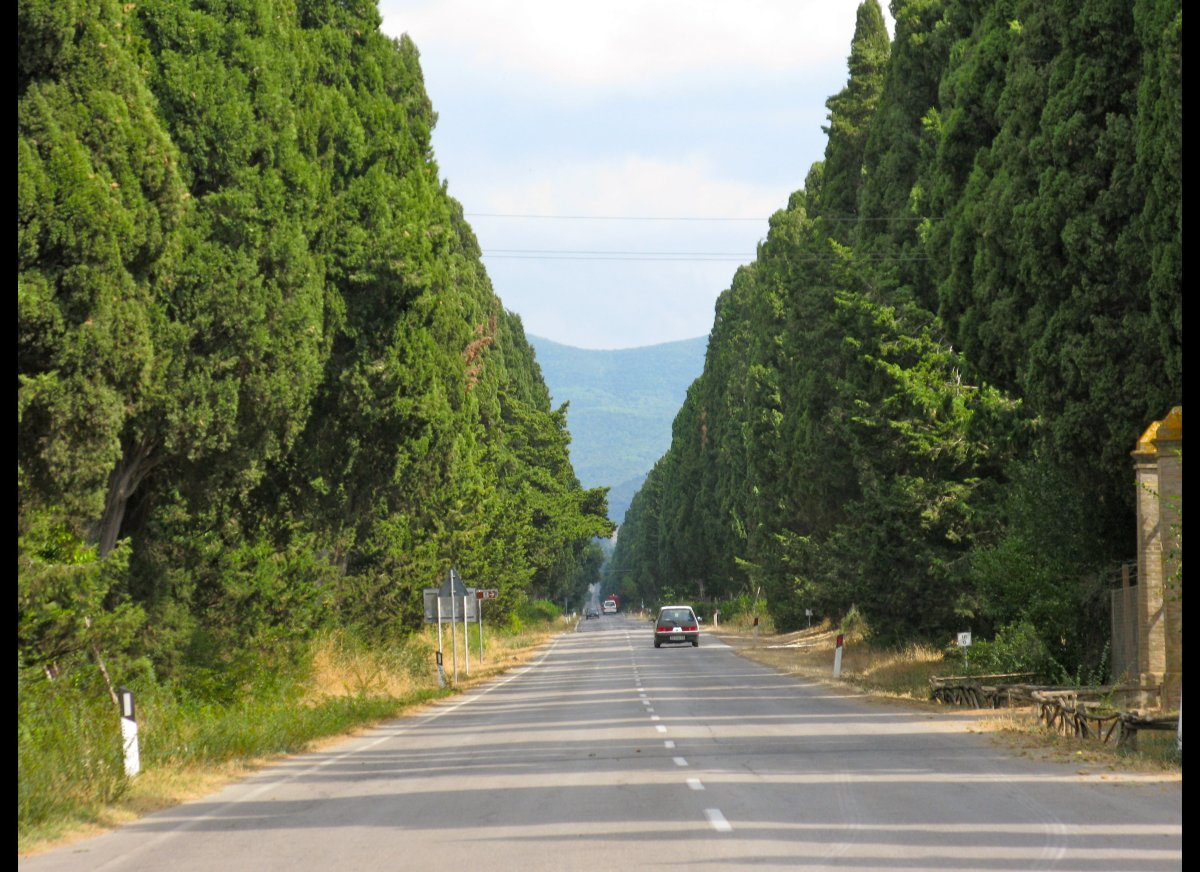 The Via Bolgherese, or Cypress Avenue, leads to the tiny village with a big reputation for wine.