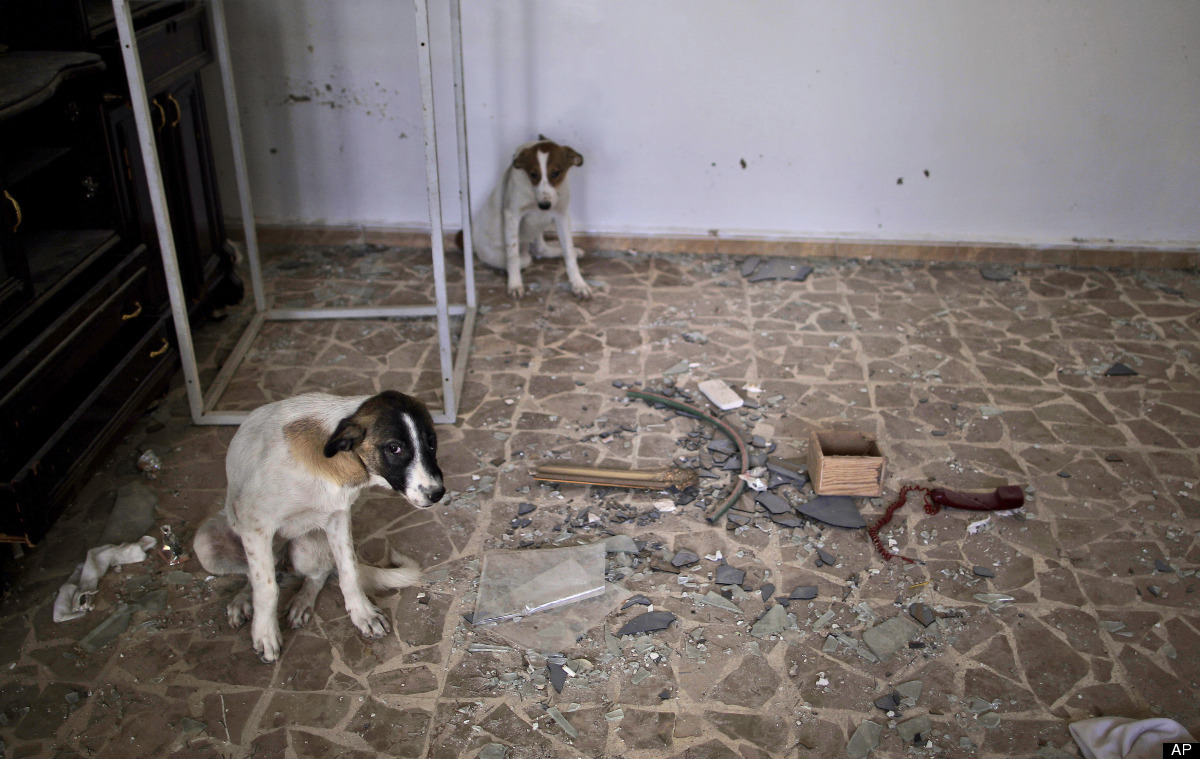 In this Wednesday, Aug. 29, 2012 photo, stray dogs take shelter inside a damaged Syrian house, one of more than a dozen homes