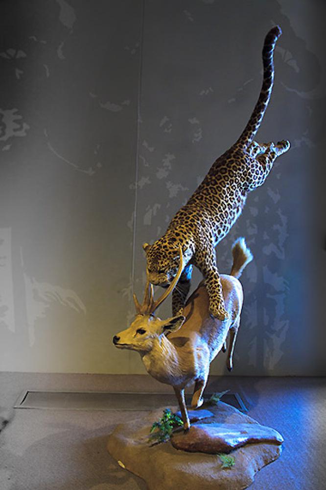 Delbridge Museum of Natural History display.  <em>Photo: Paul Ross</em>