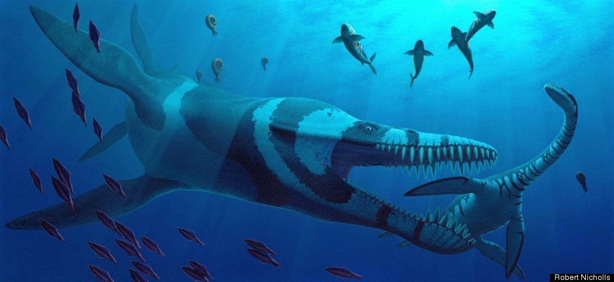 A 36-foot-long Pliosaurus attacks the plesiosaur Cryptoclidus, a marine reptile from the Late Jurassic Period. Also shown: th