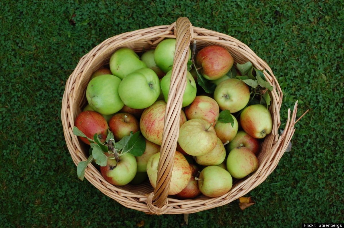 "One medium-sized apple contains about <a href=""http://nutritiondata.self.com/facts/fruits-and-fruit-juices/1809/2"" target=""_h"