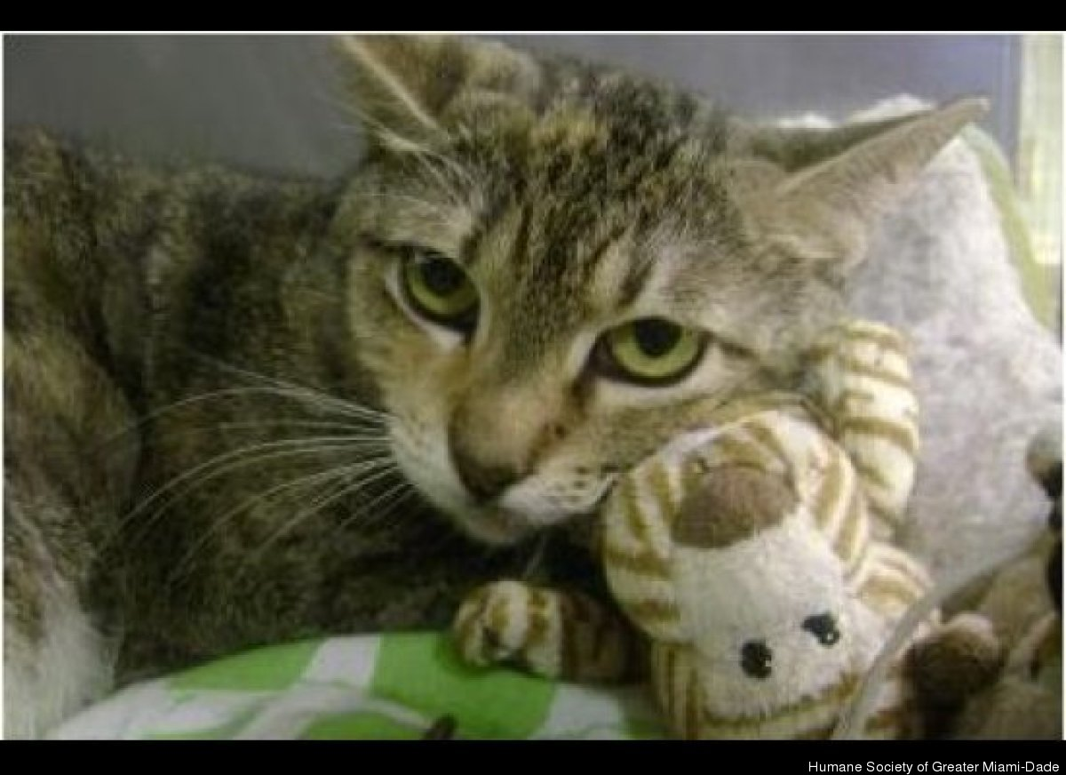 Stella (7061089) is spayed, vaccinated and micro-chipped -- basically, she's ready for her new forever home! Call the Humane
