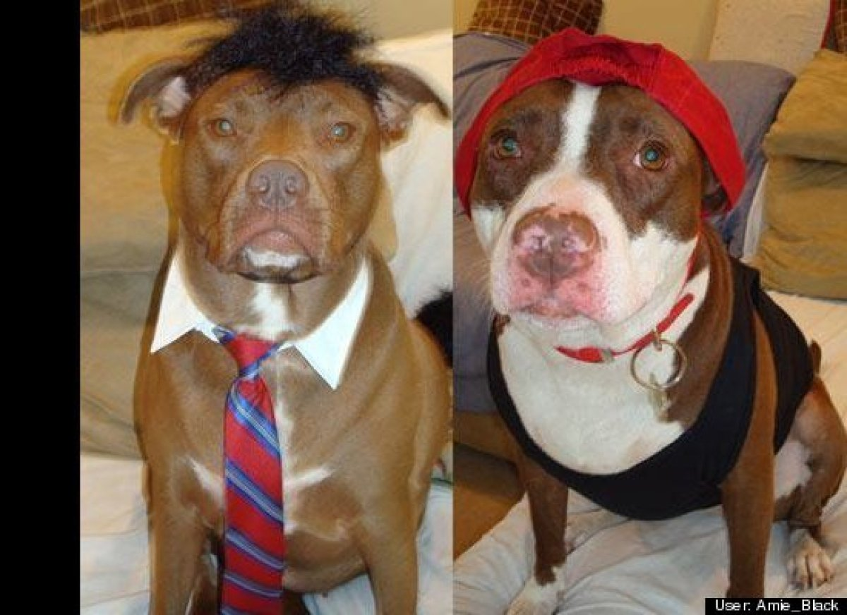 Pet Halloween Costumes & 19 Halloween Costume Ideas That Are Actually Clever | HuffPost