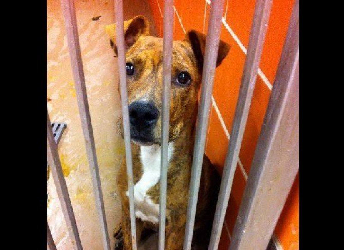Woody is a very friendly 9-month-old male mix breed pup who was found as a stay on the streets of Chicago. at Famous Fido Res