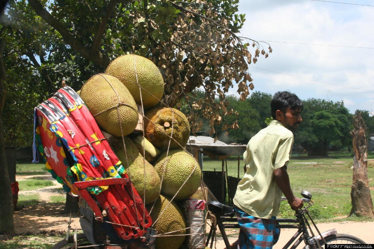 Hauling the massive jackfuit to market; it's the largest tree-ripened fruit in the world!