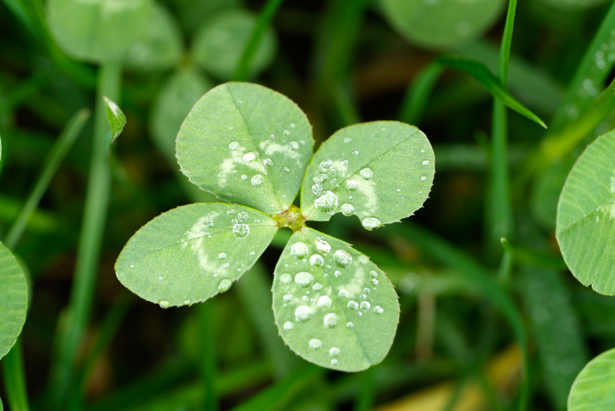 "Humble <a href=""http://nameberry.com/babyname/Clover"">Clover</a>, until recently a name most often found in the barnyard, top"