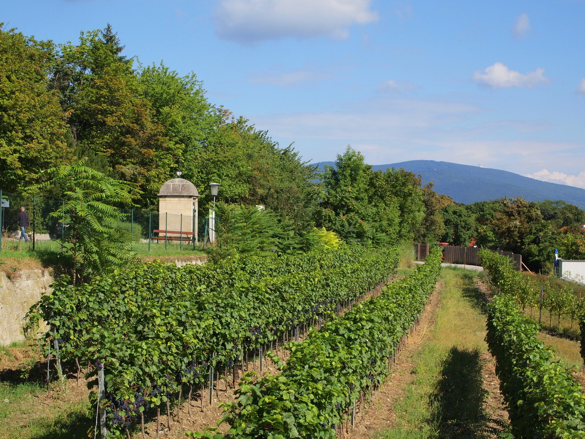 "A vineyard,  like this one in Bad Vöslau, Austria, can be a <a href=""http://melodymontero.com/vineyard_luxury/vineyard"" targe"