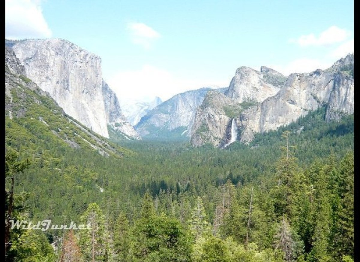 Waterfalls trickle down limestone cliffs, while wild reindeers gallop along rolling green meadows: Yosemite National Park is