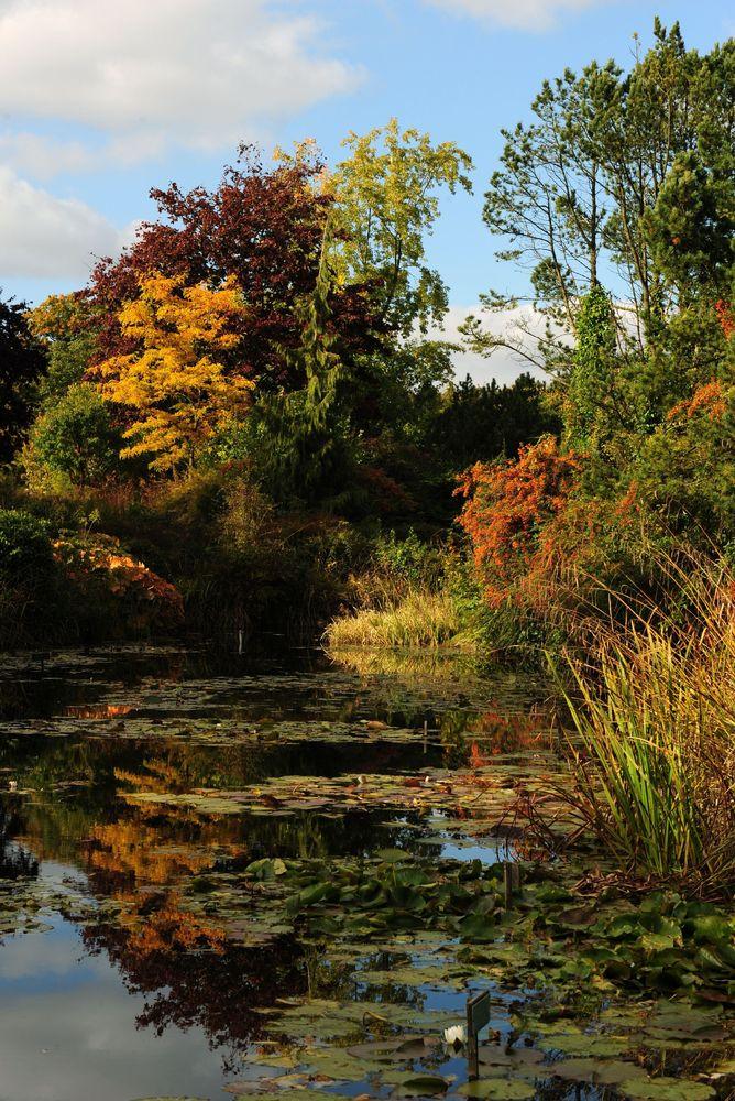 Autumn colours on display at Burnby Hall Gardens, Pocklington, East Yorkshire.