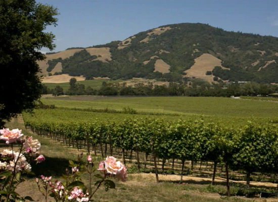 Sonoma County may not produce as much wine as nearby Napa, but what it lacks in volume, it more than makes up for in variety.