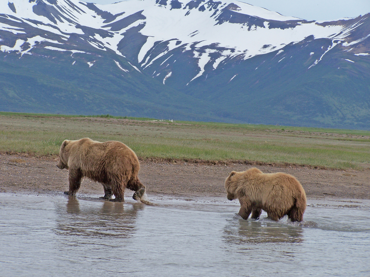 """With over 3 million acres, <a href=""""http://www.nps.gov/katm/index.htm"""">Katmai National Park</a> has a remote feel and plenty"""
