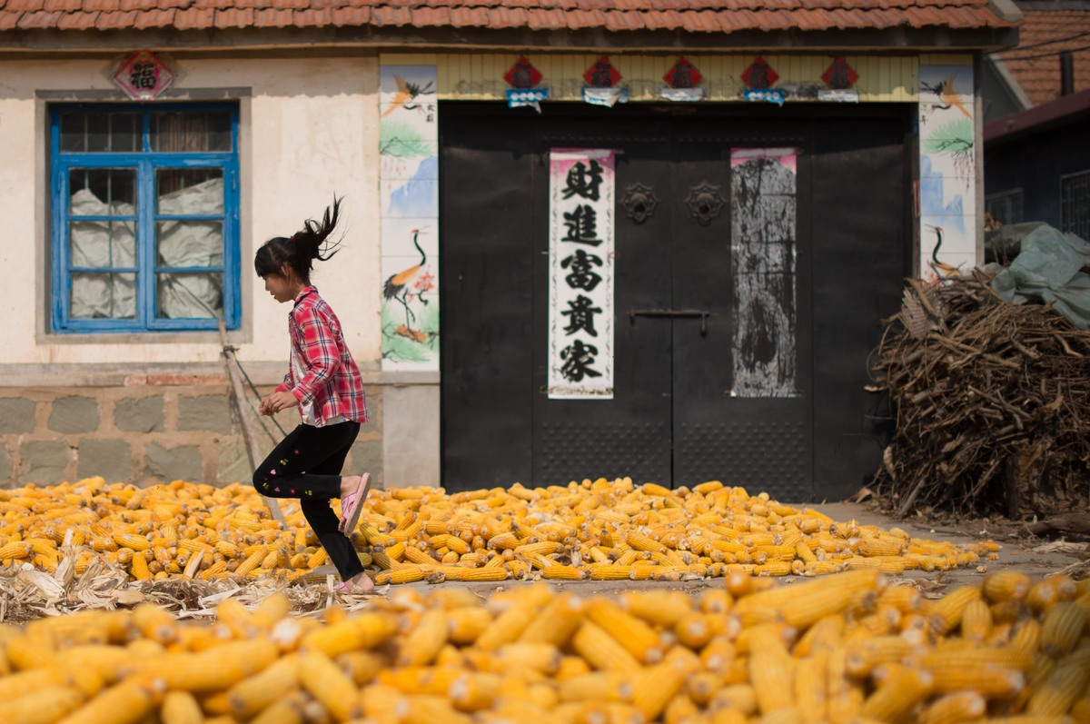 Gaomi, in eastern China's Shandong province, produces a great deal of corn as well as Nobel Prize writers.