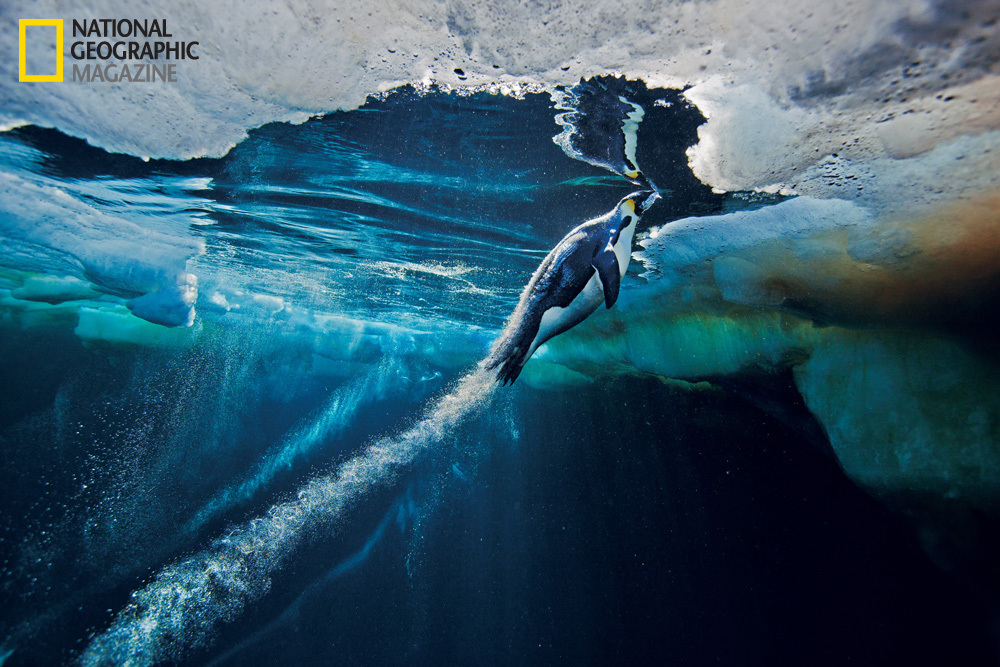 © Paul Nicklen/National Geographic