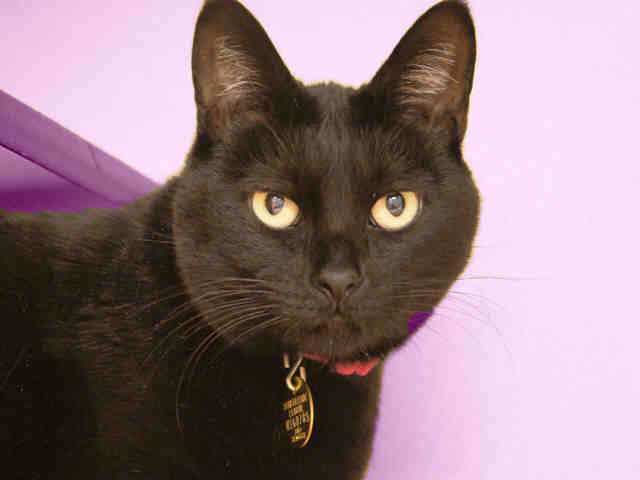 Lucky's previous owner said she got along well with adults, children, dogs and other cats. She is estimated to be about 8 yea