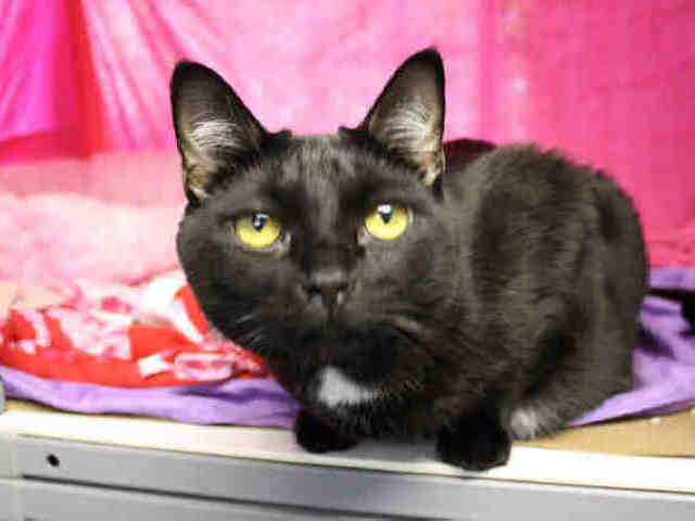 Midnight is a very friendly cat, who was abandoned in a carrier outside Animal Care & Control of NYC's Staten Island Center.