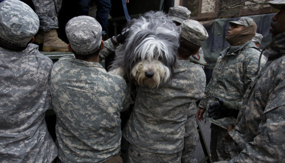 A dog named Shaggy is handed from a National Guard truck to National Guard personnel after the dog and his owner left a flood