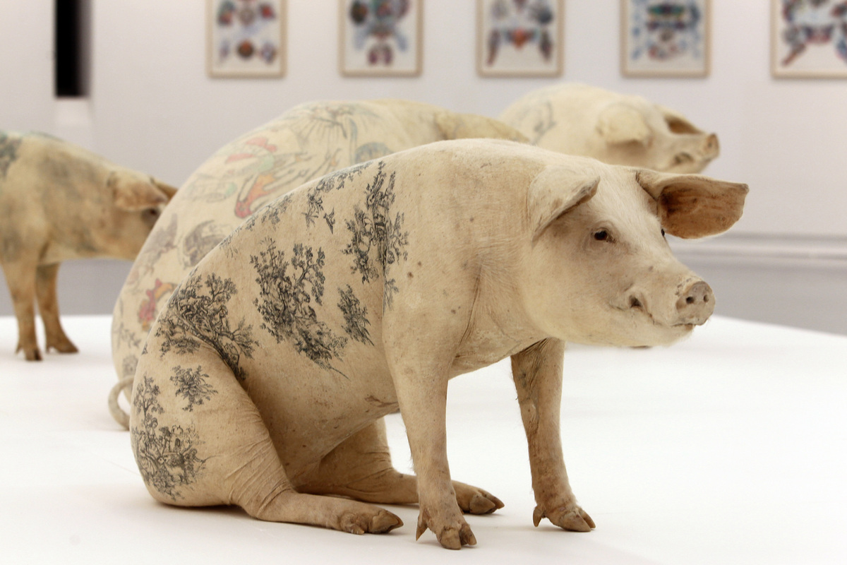 "<a href=""http://www.wimdelvoye.be/"">Belgian artist Wim Delvoye</a> began raising and tattooing pigs in 2004 for a project tit"