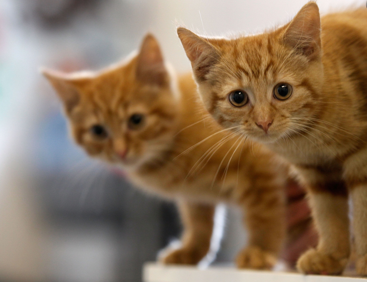 It should come as no surprise that the number-one female cat name has <em>Twilight</em> mania to thank for its popularity. An