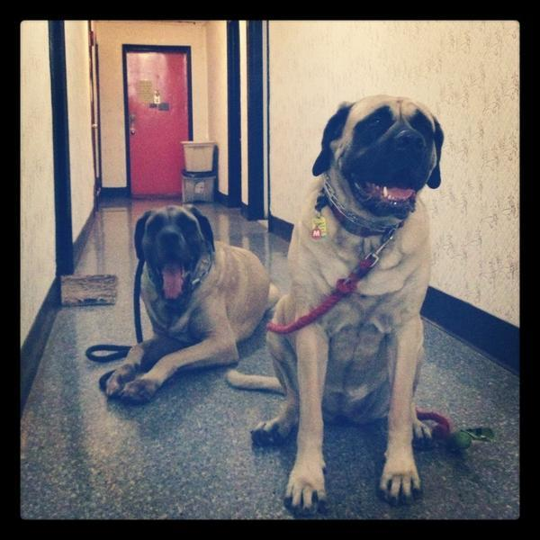 @HuffPostArts #hpthankful for my dog (far end) http://t.co/QQrsIXP2