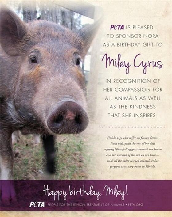 In honor of Miley Cyrus's 20th birthday last Friday, PETA offered the animal-loving star an unusual gift: They sponsored a pi