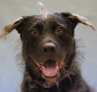 Nina is a female 3-year-old Retriever/Terrier mix. Visit Nina at the Naperville Area Humane Society at 1620 W. Diehl Road in