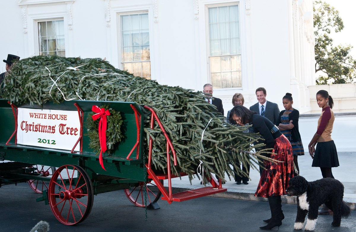 Michelle Obama and her daughters receive the Christmas tree.  (AFP)