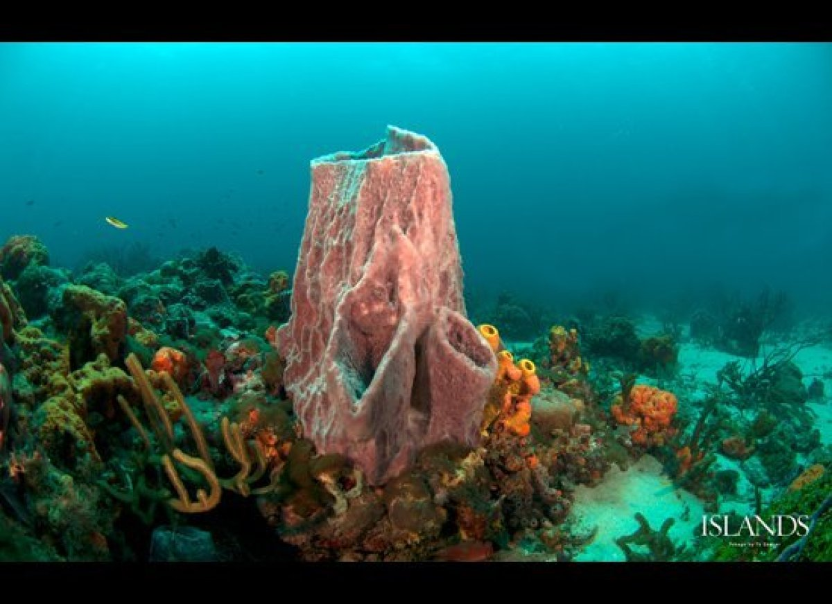 Imagine seeing this underwater view in the Caribbean waters off Tobago. Find more scuba diving and snorkeling photos and dest