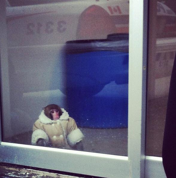 """@dzd_lisa: """"Anyone lose their monkey at Ikea?"""""""