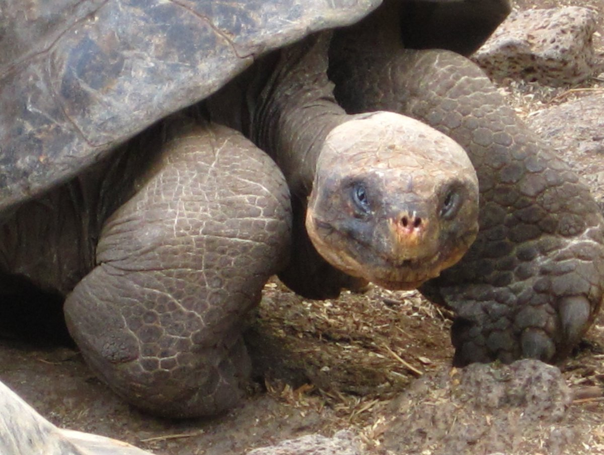 Take a trip down to the land of the giant tortoises. Swim with sea lions, explore with iguanas and see where Charles Darwin c