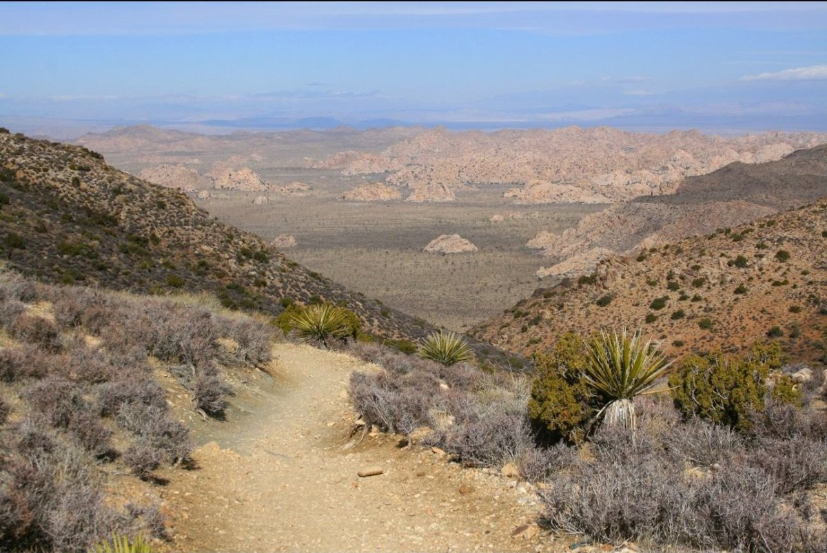 There's no better place for an overview of Joshua Tree than Ryan Mountain, which has 360-degree views over forests of Joshua