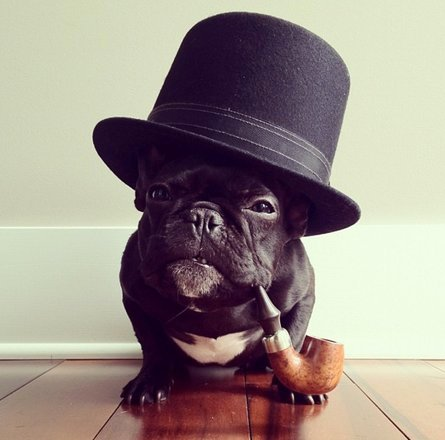 This hipster French bulldog from San Francisco is one of the cutest  and coolest things the Internet has ever seen. 