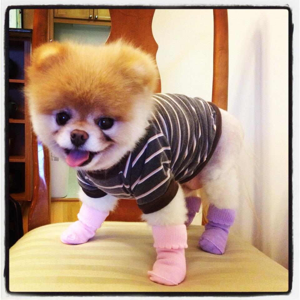 Because a dog's gotta have color-coordinated socks.