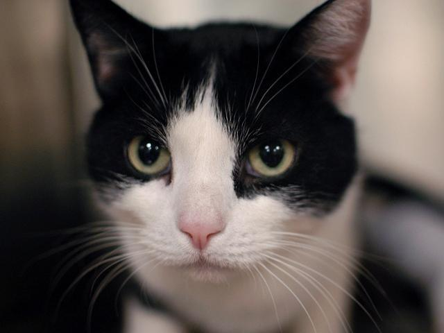 Handsome Malloy, estimated to be about three-years-old, was found as stray but is no stranger to affection. Meet this outgoin