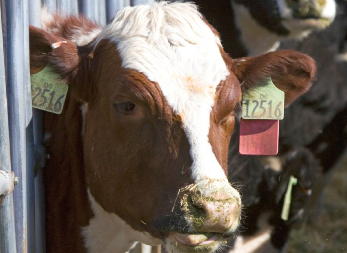 "There's a reason feedlot beef was included in the Center for Science and Public Interest's <a href=""http://www.huffingtonpost"