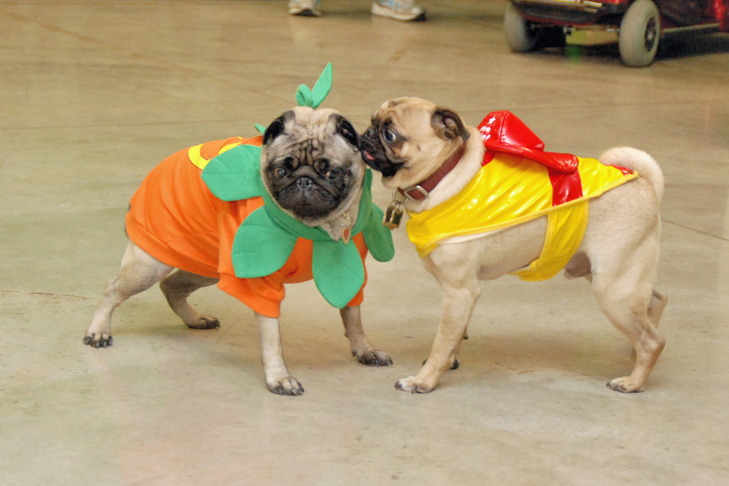 """""""What happens on Halloween, stays on Halloween""""  (<a href=""""http://www.flickr.com/photos/rochesterplaygroup/4068706330/"""">Image"""