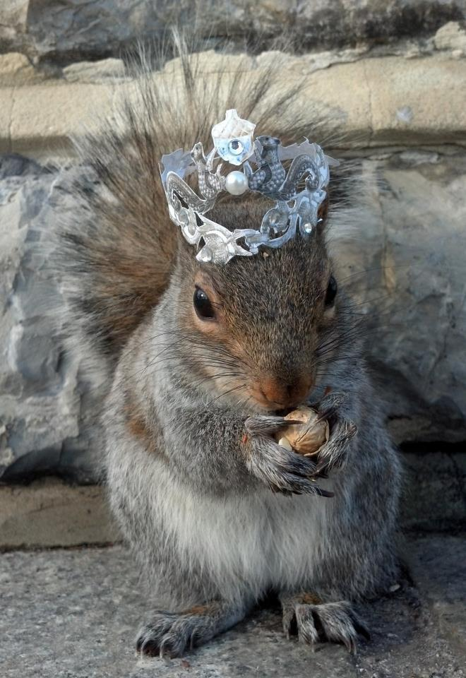 """Presenting Her Royal Highness Princess Sneezy of Nuttingham, AKA """"The Princess and The Peanut"""""""